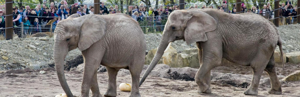 zooparkfreunde-elefant-001