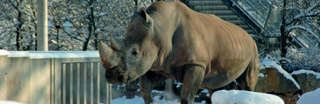 zooparkfreunde-nashorn-001
